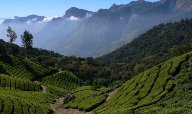 tea-plantation-fotolia-850x504