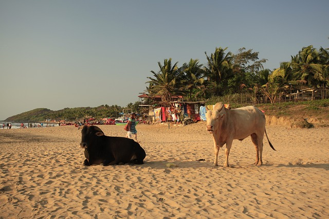 goa or kerala